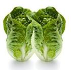 Picture of LETTUCE COS BABY TWIN PACK