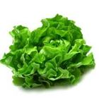 Picture of LETTUCE OAK GREEN