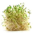 Picture of ALFALFA SPROUTS PACK 120G