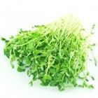 Picture of SNOW PEA SPROUTS PACK 160G