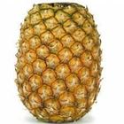 Picture of PINEAPPLE TOPLESS